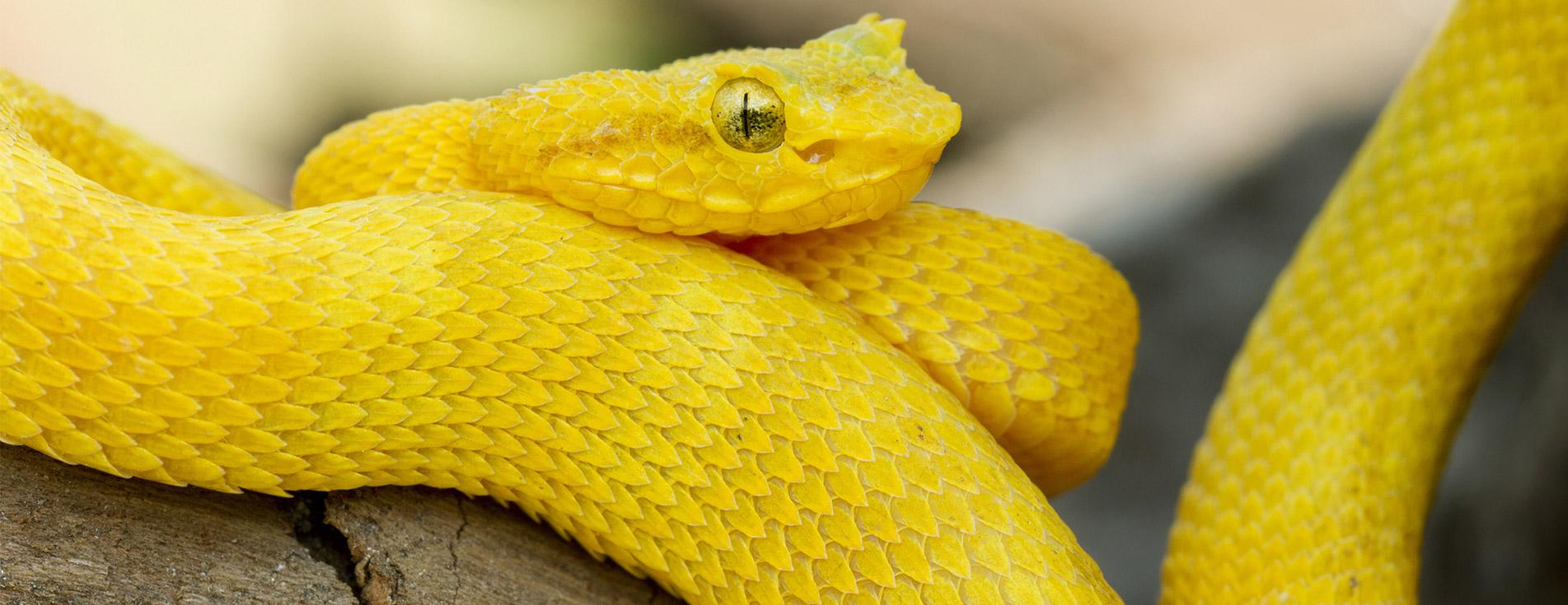 Snakes 3D