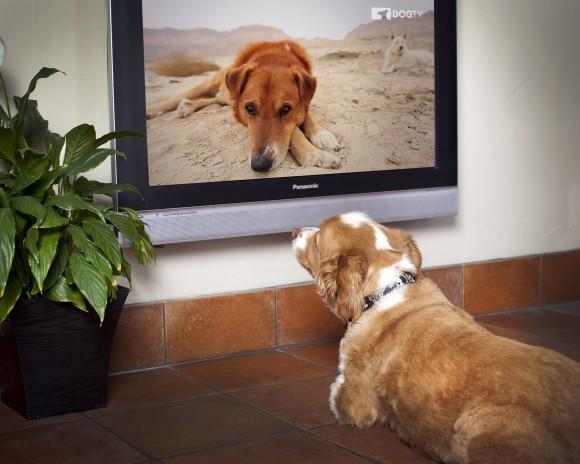 Dog TV Foto
