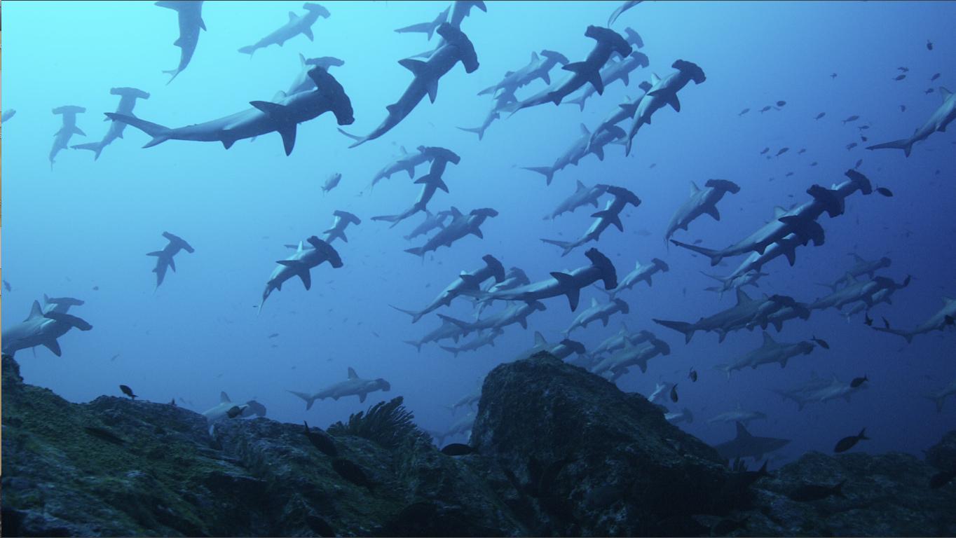 Der wilde Pazifik – Die Schönheit des Lebens