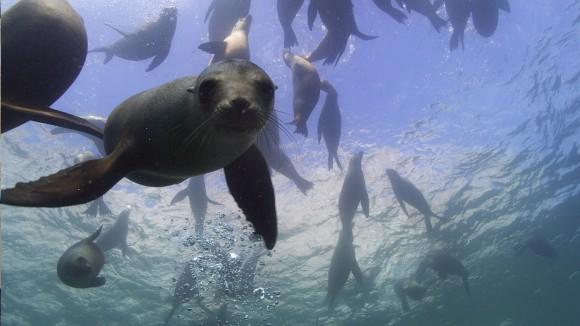 Der wilde Pazifik Szenenfoto