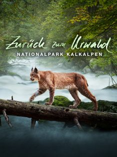 zurueck-zum-urwald_amazon_1920x2560