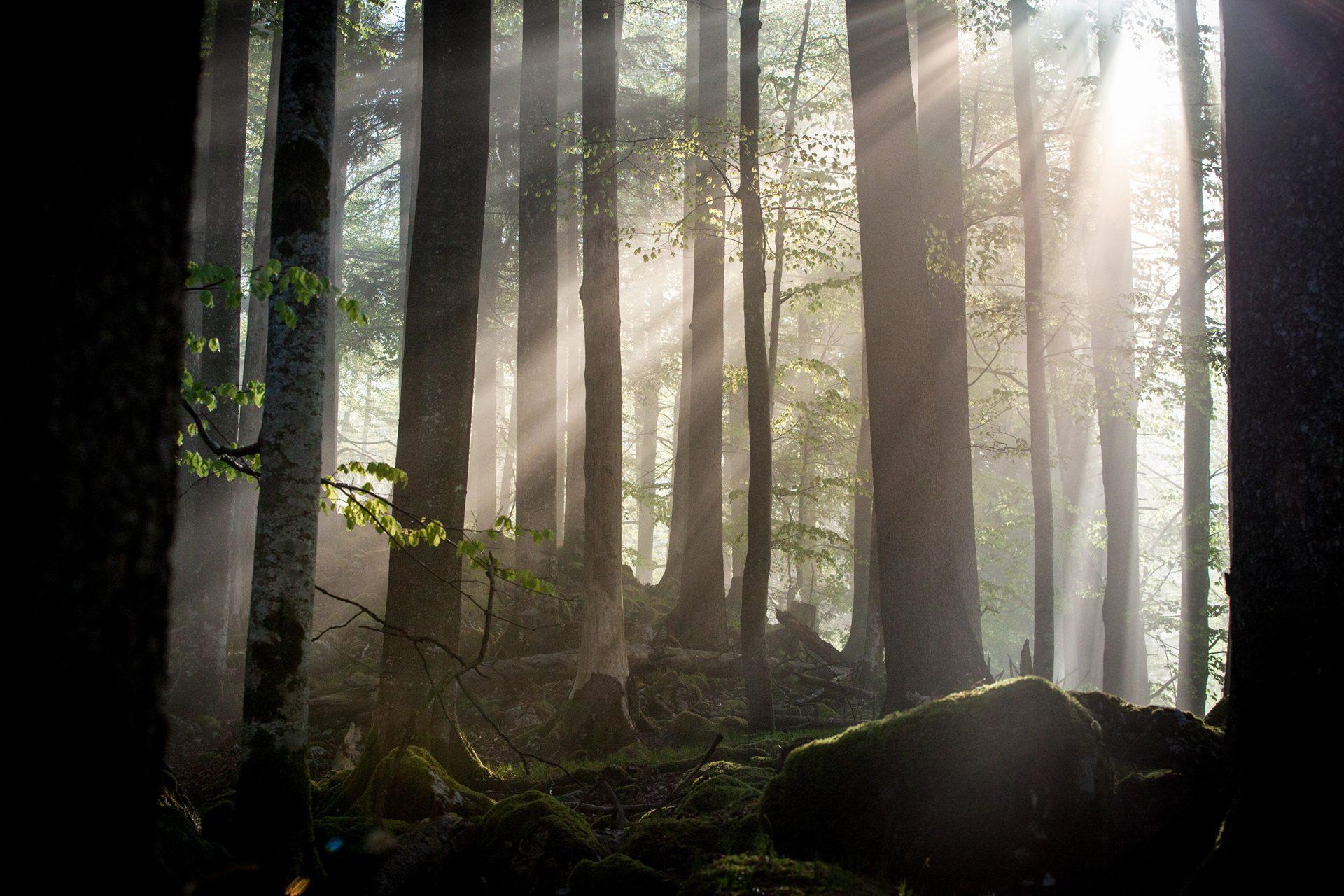 Zurück zum Urwald – Der Nationalpark Kalkalpen