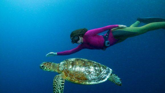Great Barrier Reef Szenenbild