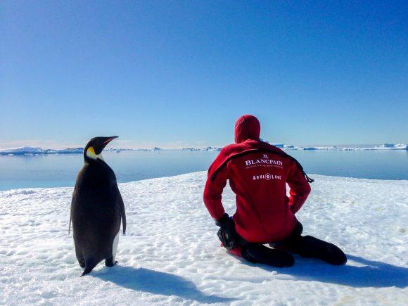 Laurent Ballesta se pr+®pare +á la plong+®e aux c+¦t+®s d'un manchot Empereur -®C+®dric Gentil_Exp+®dition Wild-Touch Antarctica!