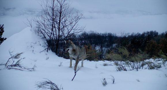 Wolf Walk Szenenbild